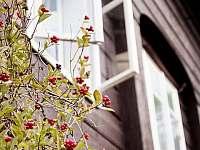 Chalupa Tulipánka - chalupa ubytování Krásná Lípa - 9