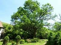 zahrada - chalupa k pronájmu Kyjov u Krásné Lípy