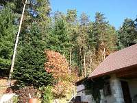 Chata k pronájmu - chata ubytování Jetřichovice - 5