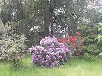 zahrada s loukou - chalupa k pronajmutí Horní Podluží