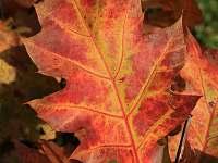 Podzim v Českém Švýcarsku - Dolní Chřibská