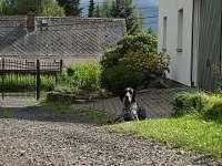 Pes není v ceně:-) - pronájem chaty Sněžník