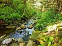 Lesenský potok - chata k pronajmutí Dolní Podluží