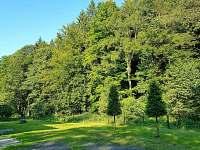 Zahrada - pronájem chaty Dolní Podluží