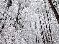 Les v zimě - chata k pronájmu Dolní Chřibská