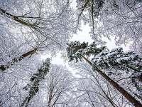 Les v zimě