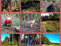 Příroda Kytlice - chata k pronajmutí