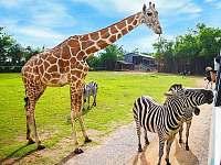Zoo Safari Dvůr Králové - Stupná