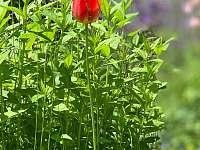 Roubenka v Podkrkonoší - pronájem chalupy - 25 Ploužnice