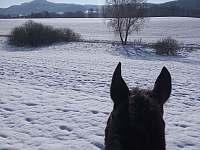 Možnost projížďky na koních v nedaleké jízdárně Hnanice - pronájem chaty Ktová (Rovensko pod Troskami)
