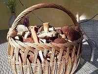 Radost z houbaření - Rokytá - Horní Rokytá