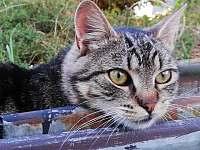 Kočkopes - Soběslavice