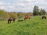 Naši koně - apartmán ubytování Soběslavice