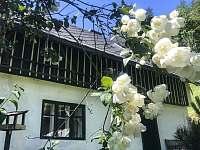 Chaloupka a jasmín v květu - k pronajmutí Skalany