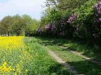 Jaro v Radostné