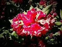 Kdyz vse kvete a je slyset zpev ptaku - pronájem chalupy Radimovice