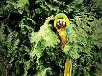 Mistni papouch - chalupa k pronajmutí Radimovice