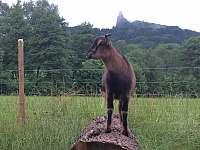 Naše zvířátka - Ktová