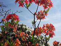 jaro na zahradě - Bukovina