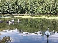 rybník Vidlák - Radvánovice