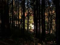 pohled z příjezdové cesty lesem