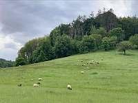 výhledy při projížďce na koloběžce - pronájem chaty Splzov