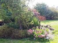 zahrada v létě 2019 - Samšina