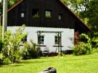 Zahrada s Altánem, terasou s krbem na grilování, ohništěm, pískovištěm.. - chalupa k pronájmu Svojek