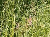 příroda u chalupy - pronájem Komárov