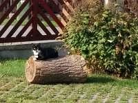 Chata Wellness - pronájem chaty - 25 Žďár u Mnichova Hradiště