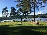 Komárovský rybník (1km od chaty) - pronájem Branžež