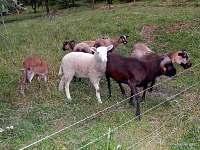 Ovce - apartmán k pronájmu Brada-Rybníček