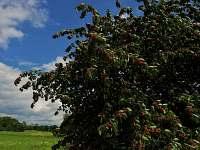 ....natrhejte si třešně v našem ovocném sadu