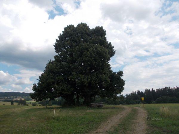Dolní Morava - pěchotný srub K -S 5 ,,U potoka,,