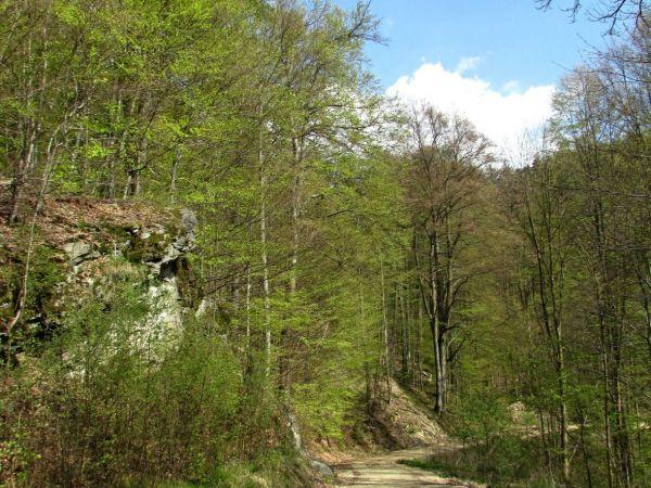 Údolí Dobřečovského potoka