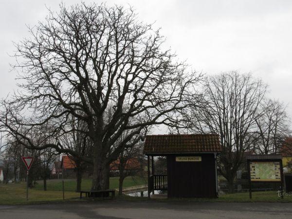 Velká Buková - obec