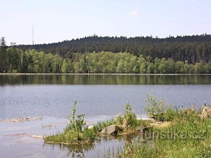 Velký pařezitý rybník - přírodní rezervace