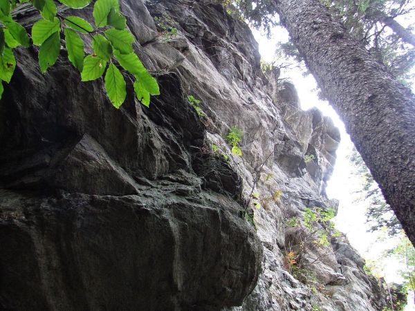 Vyhlídková skála pod Dobřečovskou horou