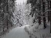 zimní procházka - Bukovice u Velkých Losin