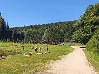 Pláž - Dolní Bušínov
