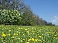 úžasné jaro... - pronájem apartmánu Dětřichovice