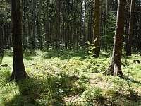 V okolním lese - Suchá Rudná