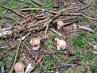 V okolním lese - chata k pronájmu Suchá Rudná