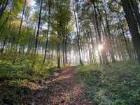 Okolní les na začátku podzimu - Oskava