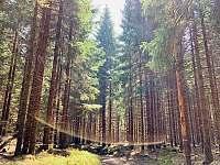 Okolní příroda - Dolní Moravice