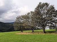 Louky nad Filipovicemi -
