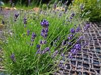 Zahrada - chalupa k pronajmutí Velké Losiny