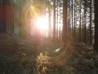 Lesní idylka v pozdním odpoledni