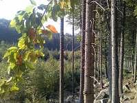 lesy u nás pohádka - vila k pronájmu Černá voda