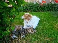zvířátka na zahradě